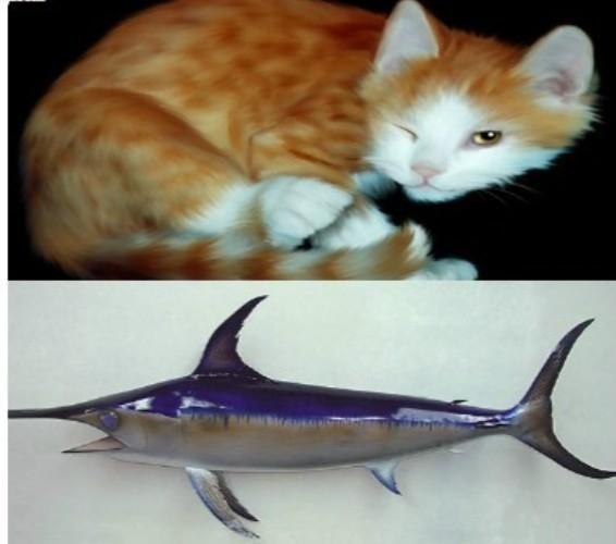 Cá kiếm và mèo